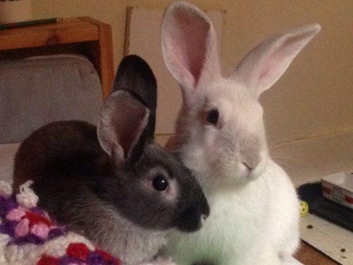 Iris & Hugo