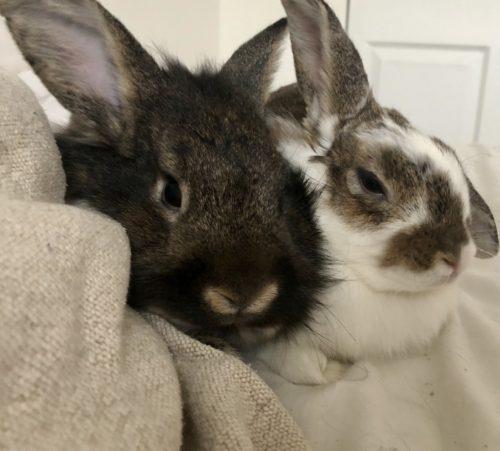 Bunny Bonding Event!