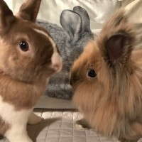 Herbie and Einstein