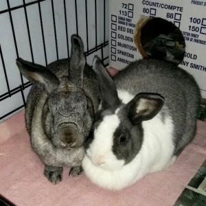 Violet and Daphne