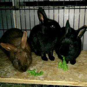 Winnie, Kanga and Roo